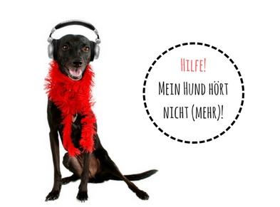 Mein Hund hört nicht