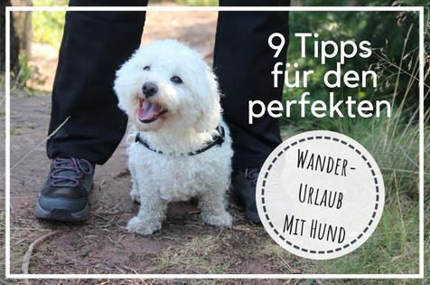 Urlaub mit Hund, Wanderurlaub mit Hund, Wanderferien mit Hund