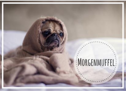 Hund als Morgenmuffel