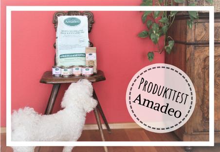 Bichon frisé Test Hundefutter Amadeo Selecto