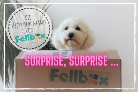 Die Überraschungsbox von Fellbox - Surprise, Surprise!