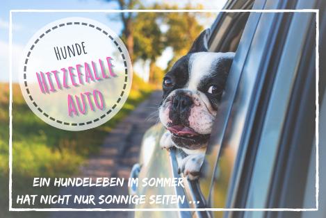 Hunde-Hitzefalle Auto! Überhitzung im Auto - im Sommer eine tödliche Gefahr