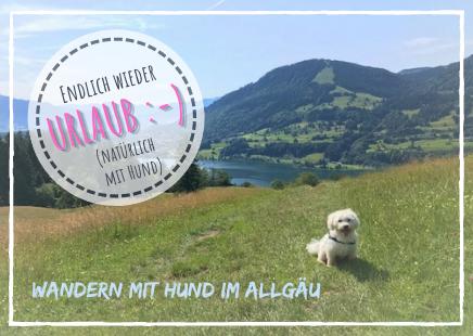 Endlich wieder Urlaub mit Hund - Wandern mit Hund im Allgäu