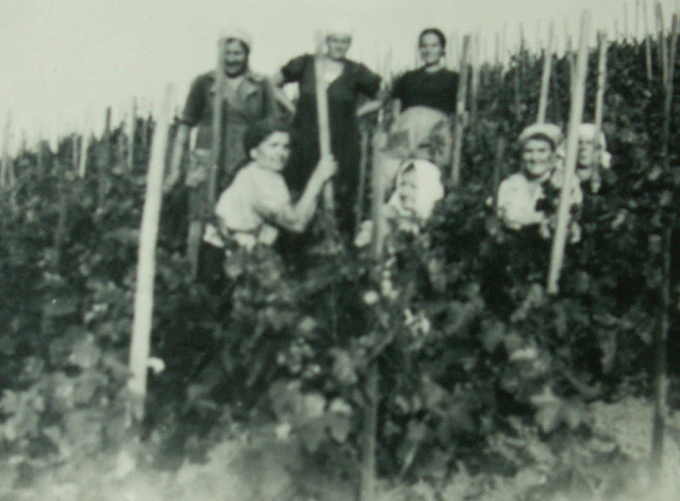 Bei der Arbeit im Weingarten halfen immer alle fest zusammen.