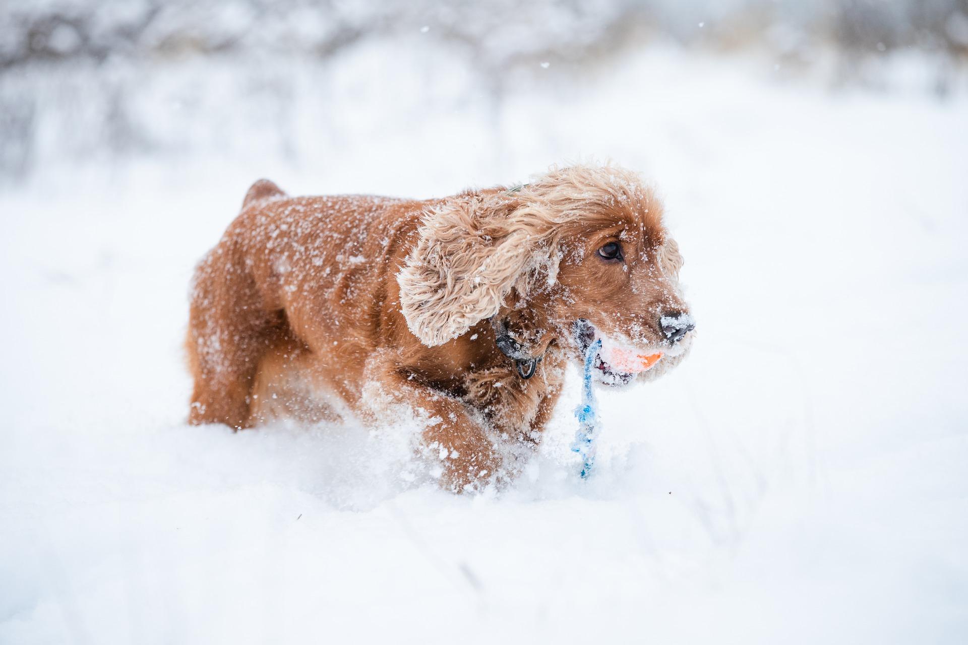 Hunde im Winter: 5 Tipps für die kalte Jahreszeit!