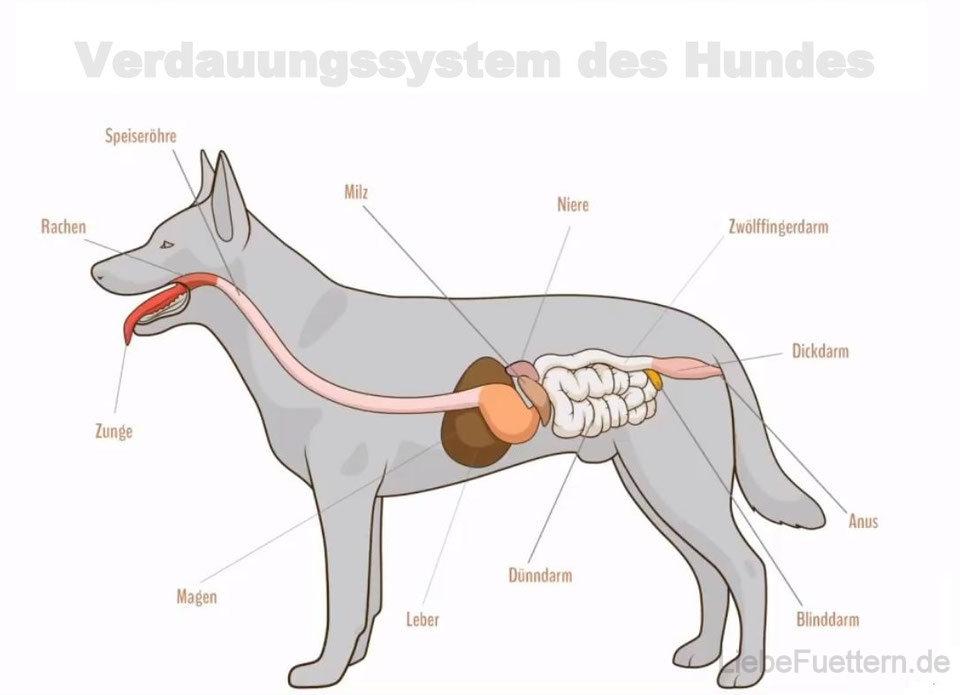 Natürliche Entgiftung & Darmsanierung beim Hund