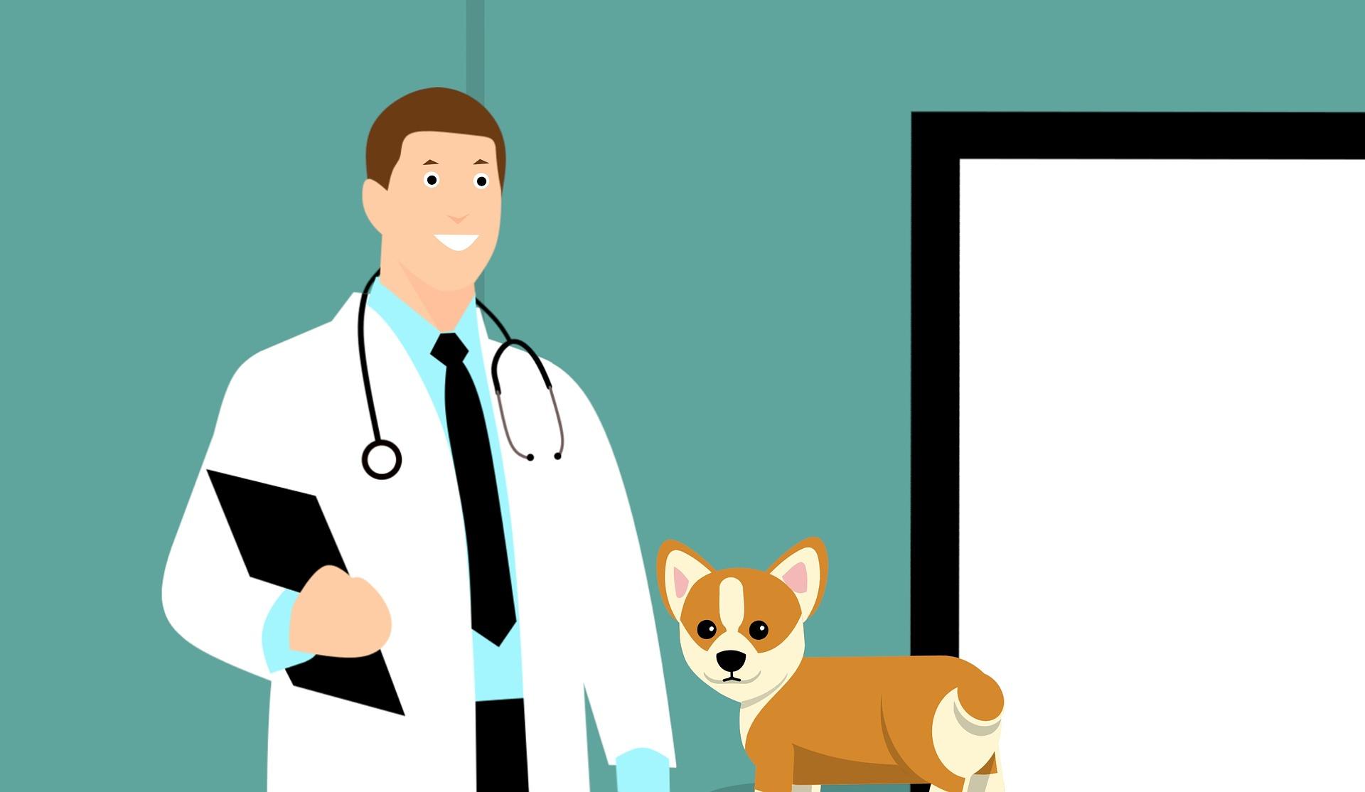 5 Tipps, wie du Hund und Katze entspannt  an den Tierarzt gewöhnst