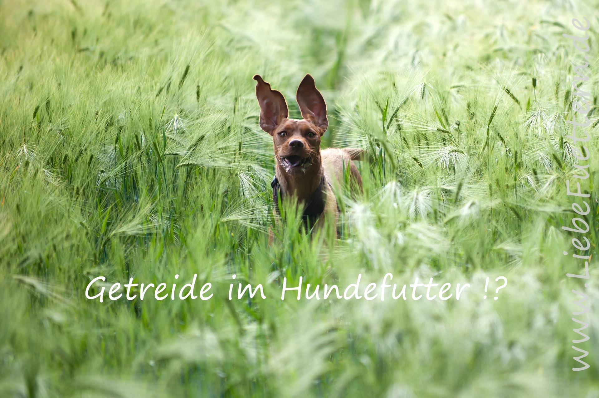 Getreide im Hundefutter - getreidefreies Hundefutter !?