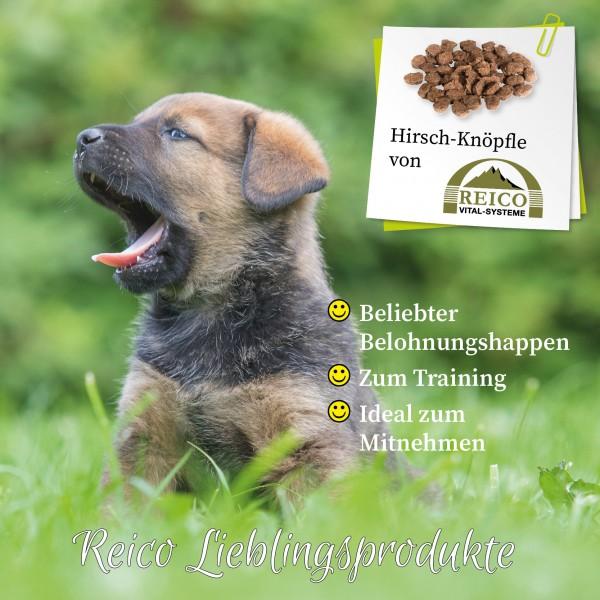 Bei Reico ist jeden Tag Welthundetag! Sitz, platz, peng! Du wunderst Dich, warum Dein Hund sein ganzes Programm vor Dir abzieht? Schau mal in Deine Tasche! Ist da vielleicht eine Tüte unserer Hirsch-Knöpfle drin?