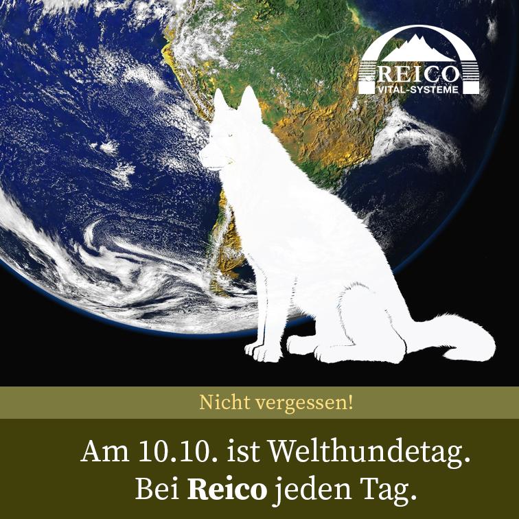 10.10. ist Welthundetag - Bei Reico jeden Tag!