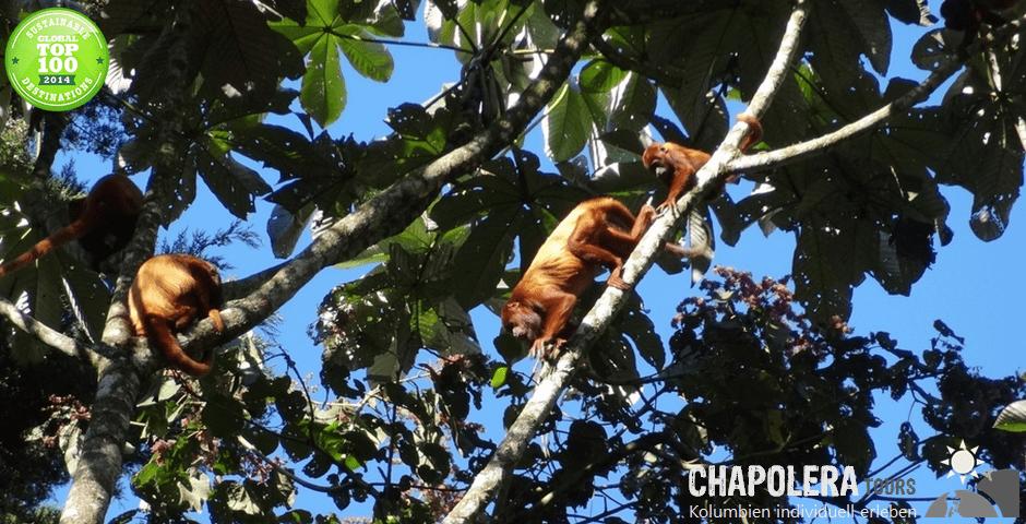 Nationalpark Otun Quimbaya (Foto: Brüllaffen)