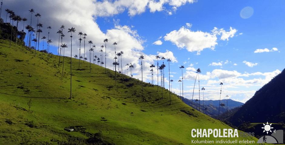 2-Tagestour Highlights im Quindio (Foto: Valle del Cocora)