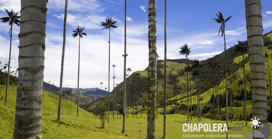 15 Tage Rundreise - Highlights von Kolumbien - Anden & Karibik (Foto: Cocoratal - Kaffeedreieck)