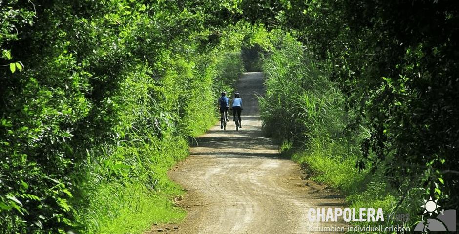 Tagestour zur Öko- Farm Granja Mama Lulu Quimbaya (Foto: Gästehaus aus Guadua- Bambus)