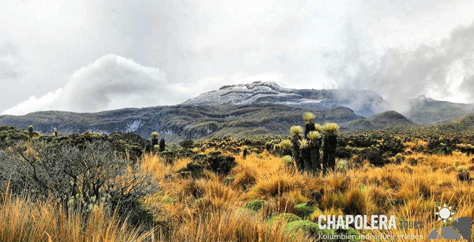 Tagestour zum Nevado del Ruiz (Foto: Frailejones im Nationalpark Los Nevados)