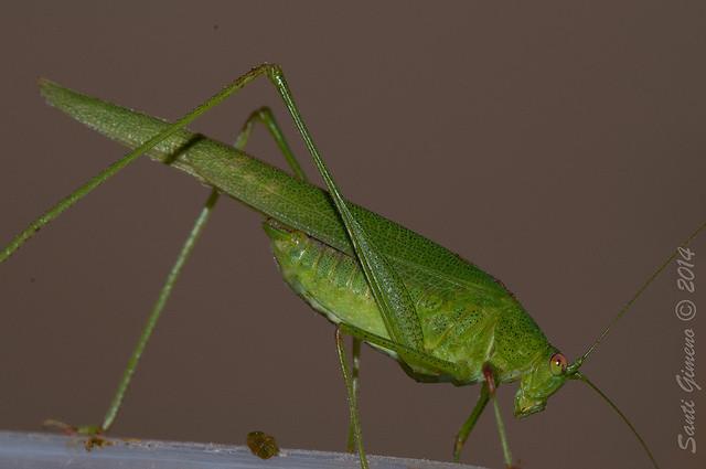 Qui diu que s' ha d' anar al camp a fer macros d' insectes? Aquest va venir a la cuina de casa a retratar-se