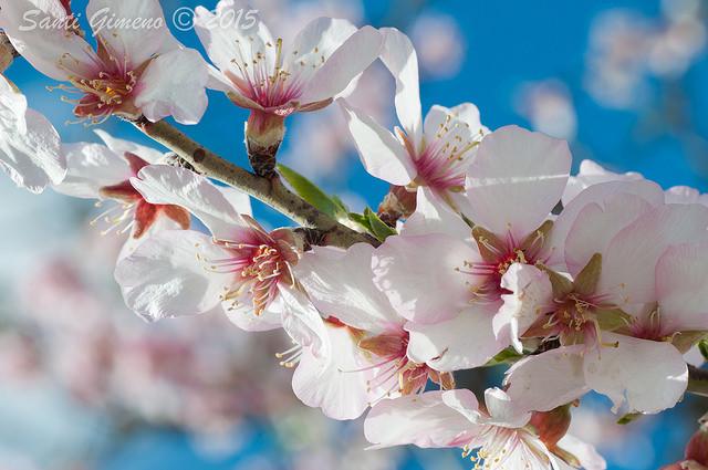 Primer avís per a la primavera