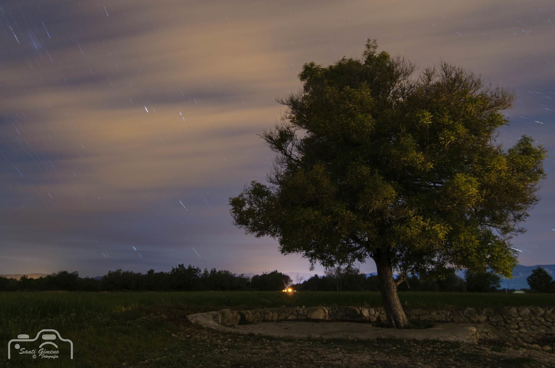 Garrofer sota els estels