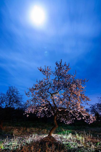 Fins els arbres, tenen ganes de primavera!