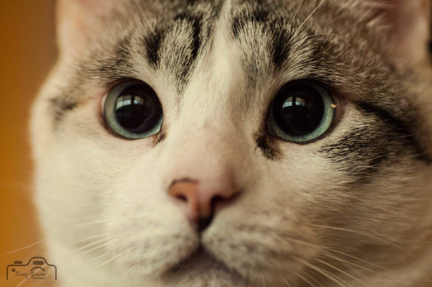 A la Xispi allò de la curiositat va matar al gat, no sembla afectar-la en excés