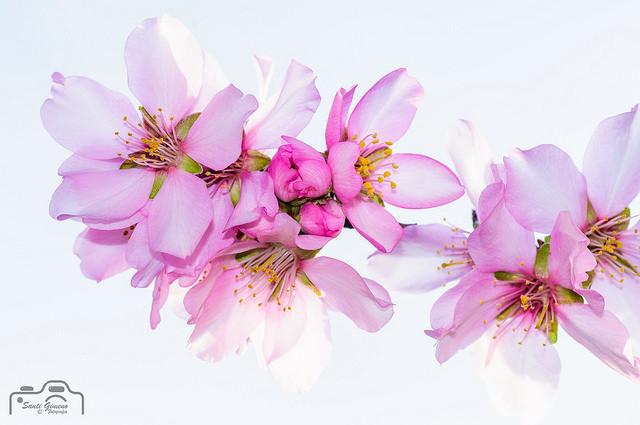 La primavera, arriba amb força al gener
