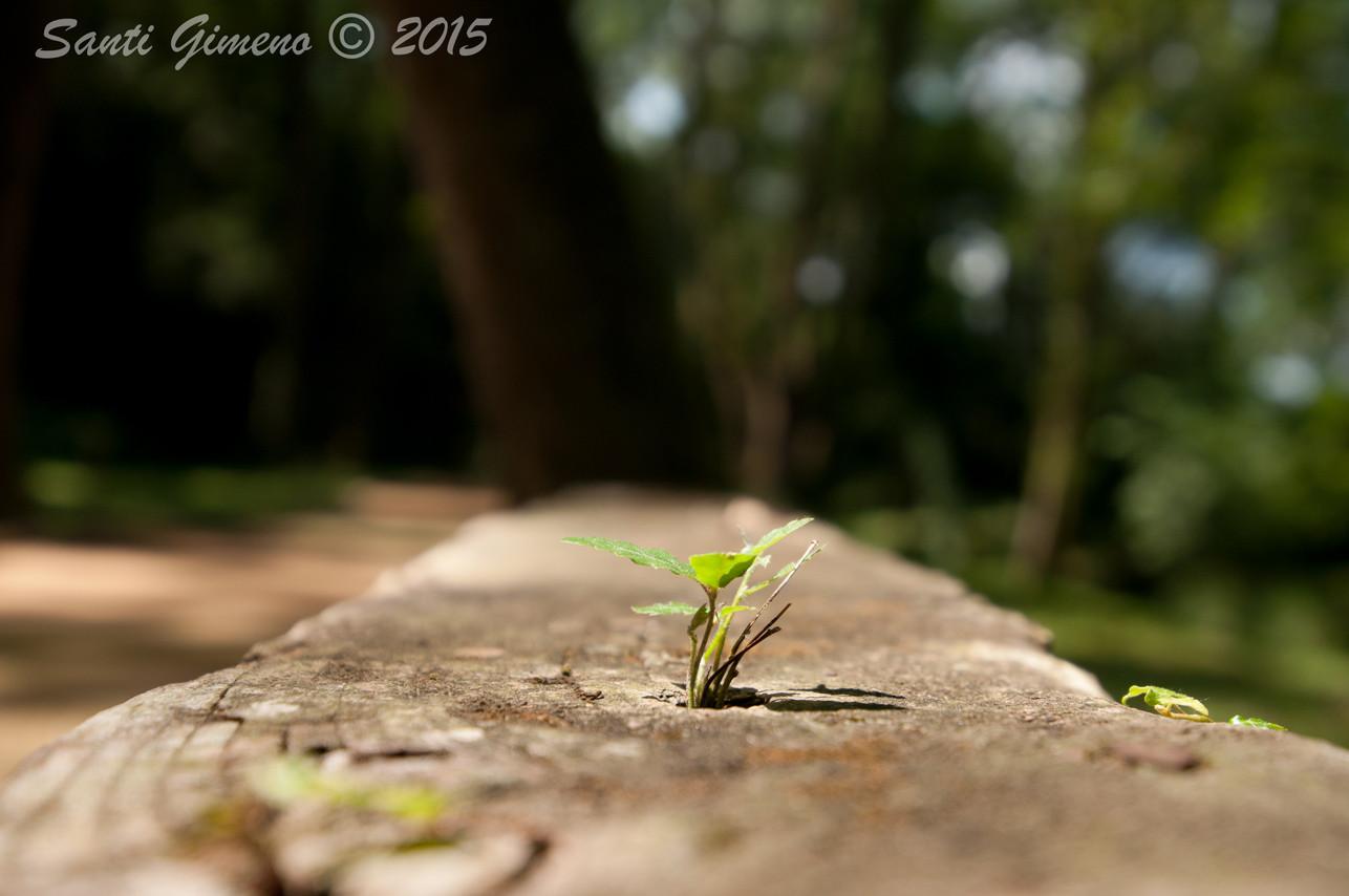 la vida s' obre pas, allà on pot