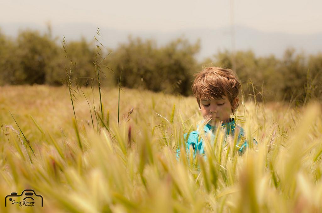 Absort entre el blat