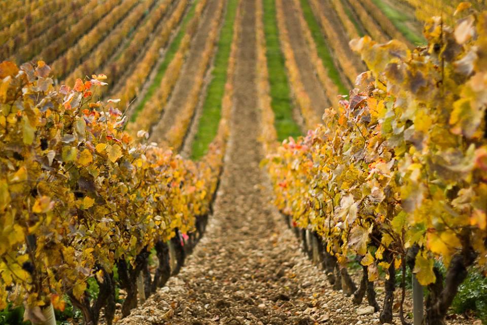 vignobles en Arbois