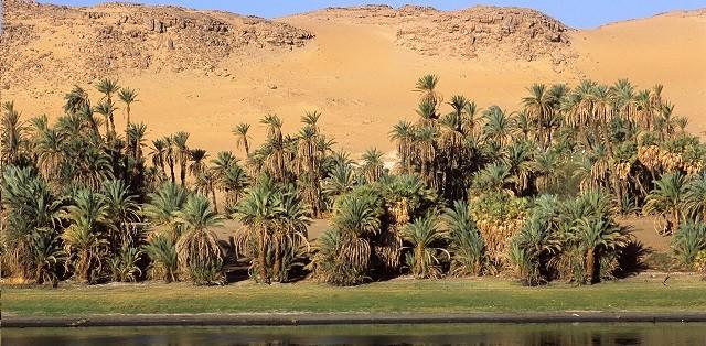 Une oasis au desert du Maroc