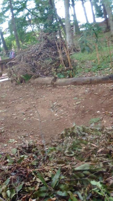枯れ枝が一杯です。地面に刺さっている枝もあります