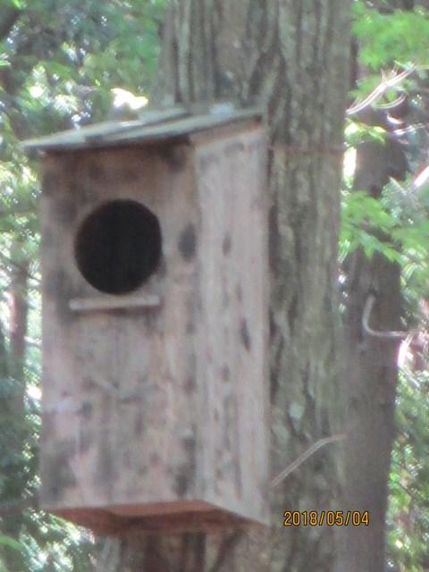 フクロウの巣箱です。夜間の撮影で、利用が確認されています。