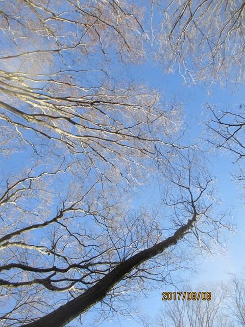 空を見上げると、何となく芽が出てきている感じがします