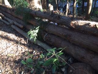 切り倒した杉は、土留めとして並べました