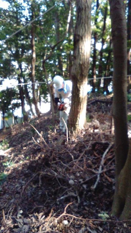 風の影響で?裂けた木を切り倒す作業です