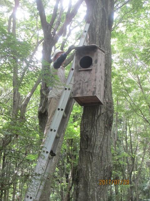 フクロウの巣箱を覗いてみます