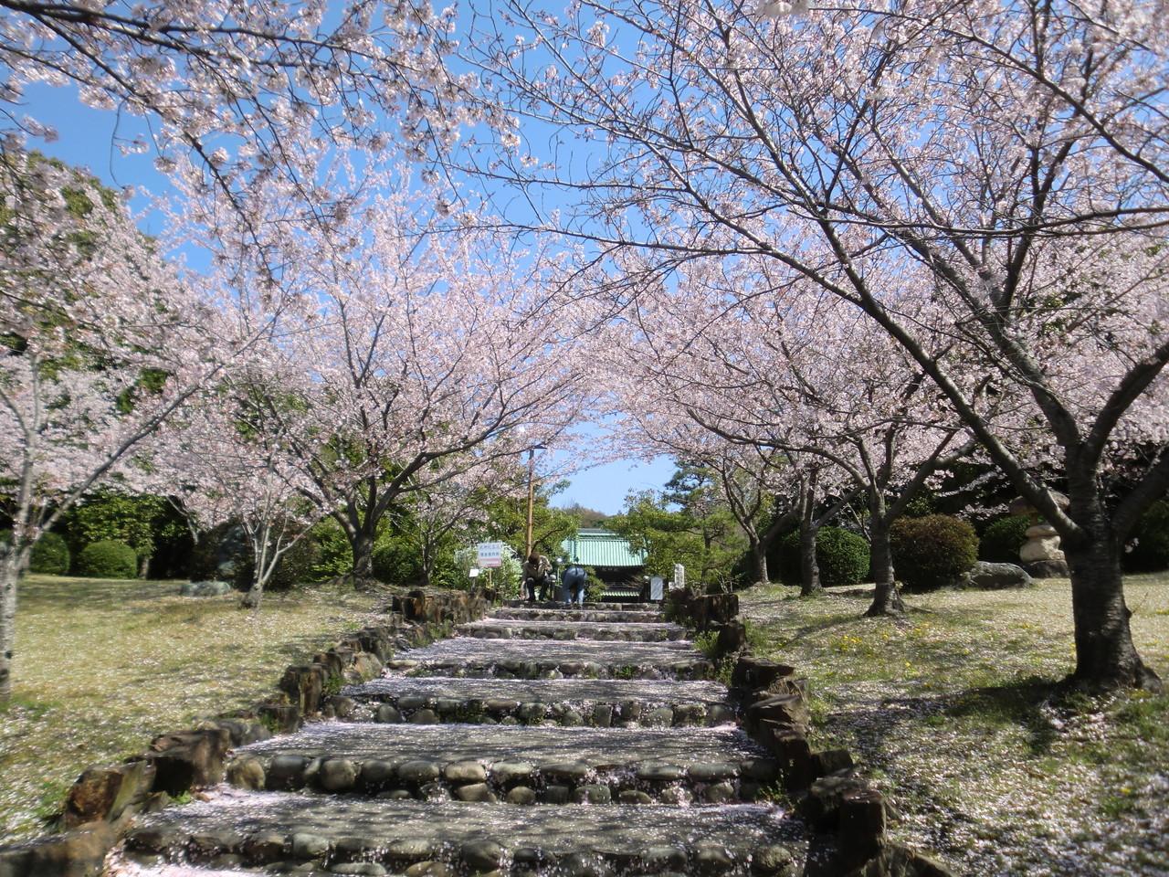 乾坤院と桜(緒川)