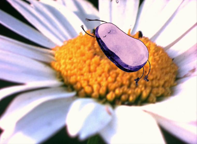LES NEELS : Une série de courts métrages, made in Région Centre, pour petits et grands !