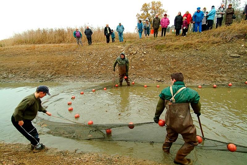 La pêche traditionnelle aux étangs de Lachaussée