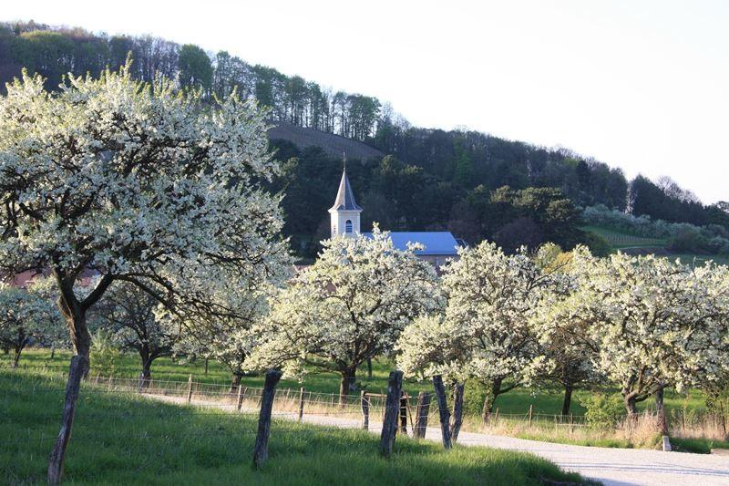 Les vergers en fleurs à Vieville