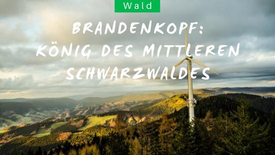 Brandenkopf Wanderung im Schwarzwald